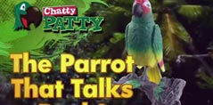 Chatty Patty